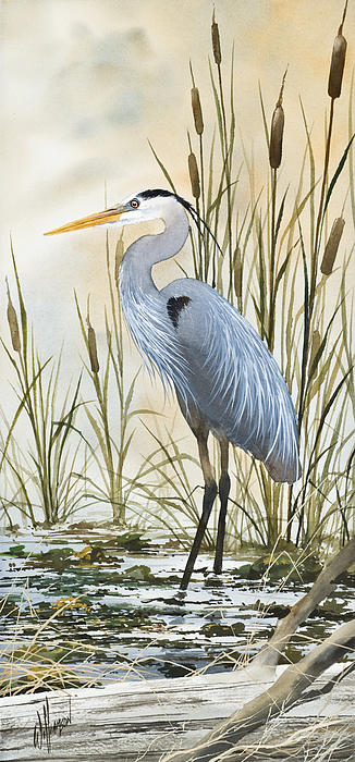 Heron And Cattails Print by James Williamson
