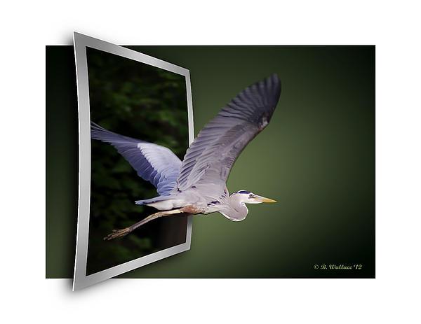 Heron In Flight - Oof Print by Brian Wallace