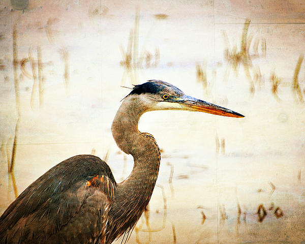 Heron Print by Marty Koch