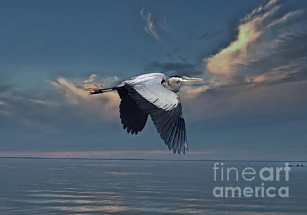 Andrea Kollo - Heron Night Flight