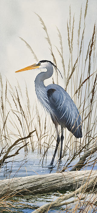 James Williamson - Herons Natural World