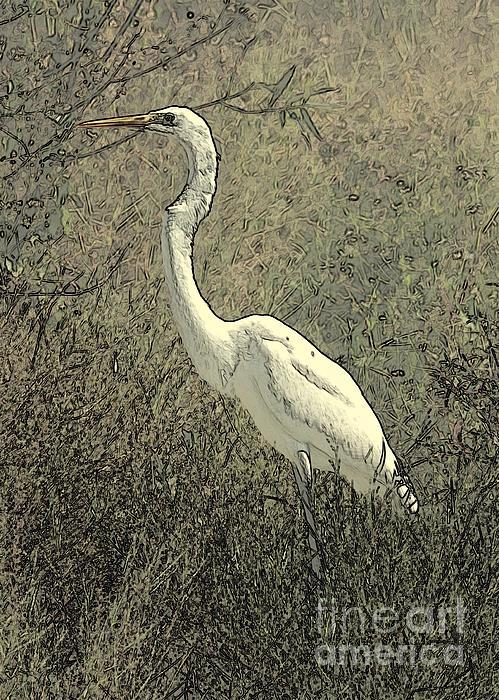 Hidden Egret Print by Carol Groenen