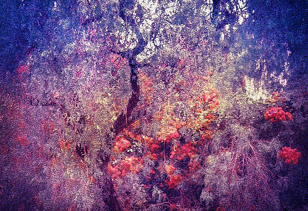 Hidden Garden Of Desire Print by Jenny Rainbow
