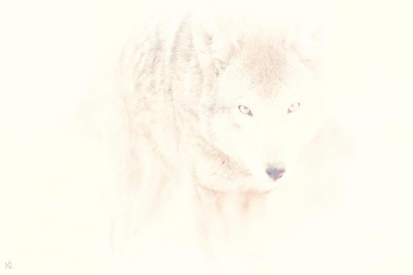 Hiding Behind Those Eyes Print by Karol  Livote