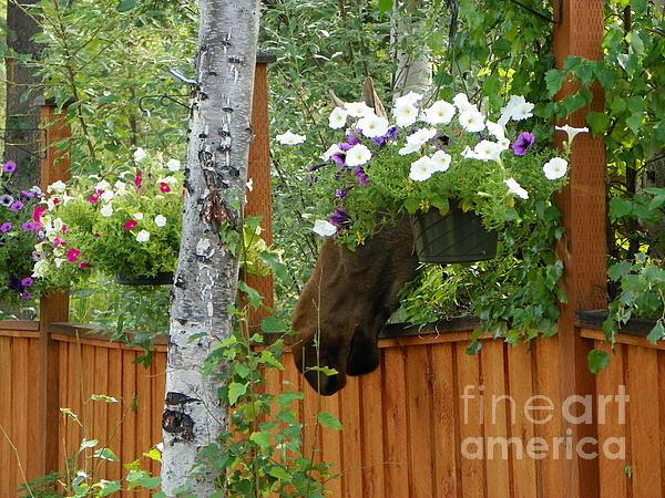 Hiding Moose Print by Jennifer Kimberly