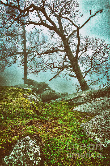 Hiking In The Fog - Blue Ridge Mountains II Print by Dan Carmichael
