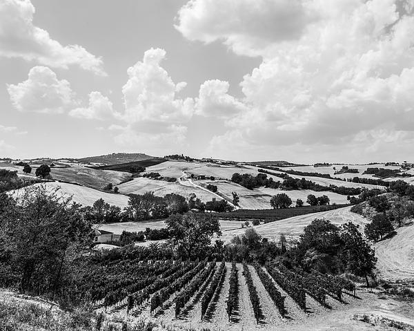 Hills Of Tuscany Print by Clint Brewer