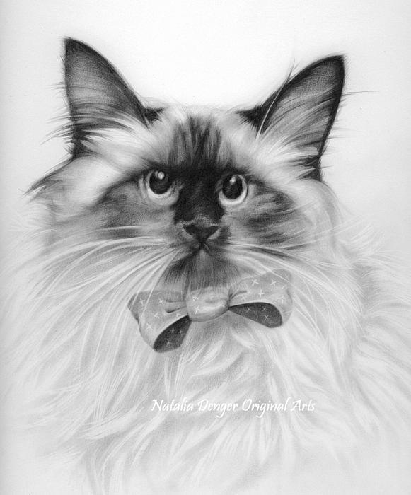 Natasha Denger - Himalayan Cat
