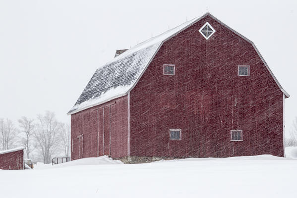 Hip Roof Red Barn In Winter Print By Joann Long