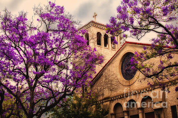 Historic Sierra Madre Congregational Church Among The Purple Jacaranda Trees  Print by Jerry Cowart