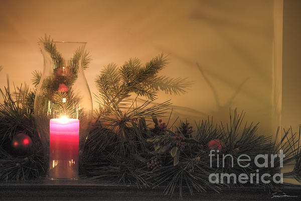 Holly And Light Print by Traci Law