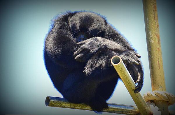 Stan Askew - Contemplating The Wild Tourist - Honolulu Zoo