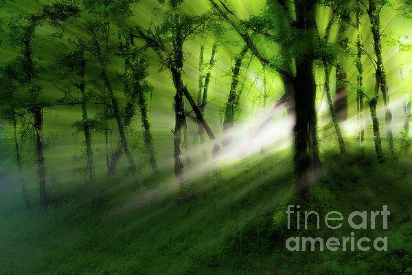 Hope Lights Eternal - A Tranquil Moments Landscape Print by Dan Carmichael