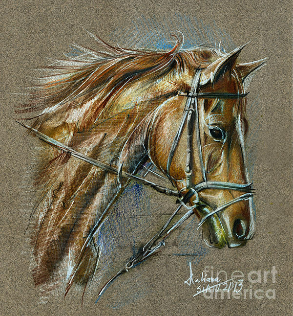 Horse Face Drawing Print by Daliana Pacuraru