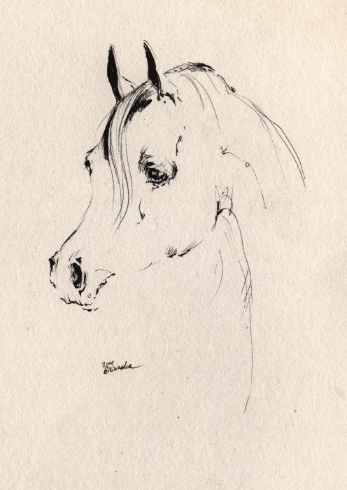 Horse Head Sketch Print by Angel  Tarantella
