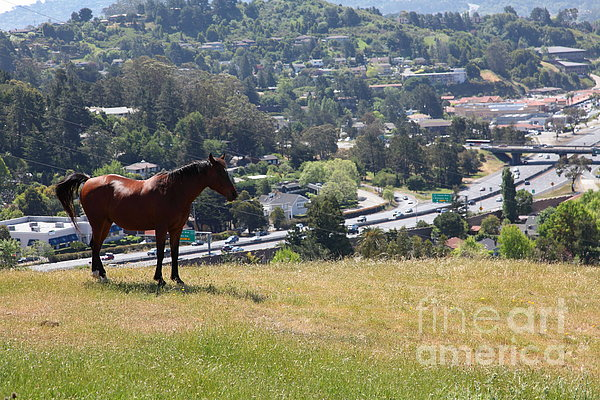 Horse Hill Mill Valley California 5d22663 Print by Wingsdomain Art and Photography