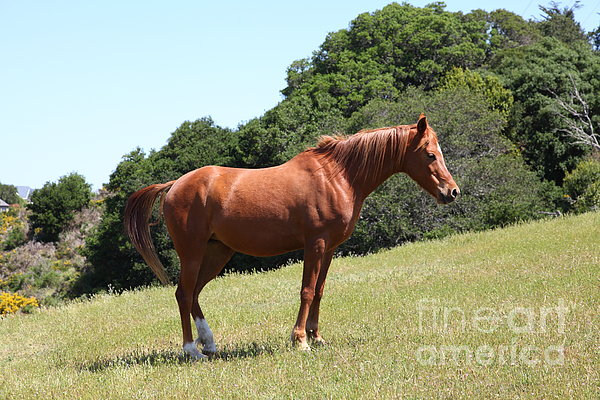 Horse Hill Mill Valley California 5d22683 Print by Wingsdomain Art and Photography