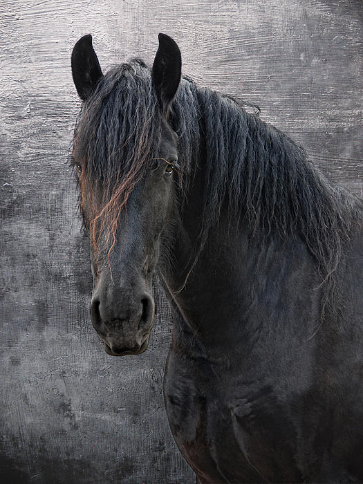 Joachim G Pinkawa - Horse With No Name