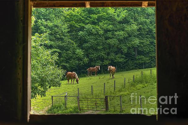 Horses Feeding In Field Print by Dan Friend