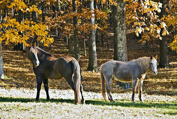 Horses In Autumn Pasture   Print by Susan Leggett