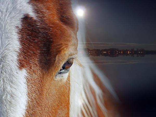 Horses Print by Mark Ashkenazi