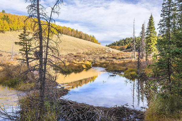 Horsethief Creek Beaver Pond - Cripple Creek Colorado Print by Brian Harig