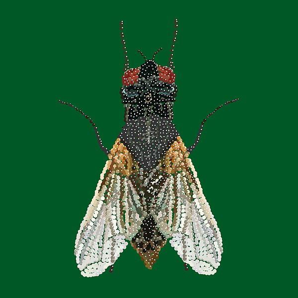 House Fly In Green Print by R  Allen Swezey