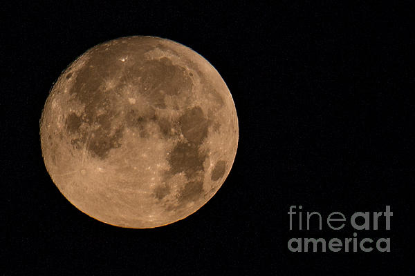 Howl At The Moon Print by Rene Triay Photography