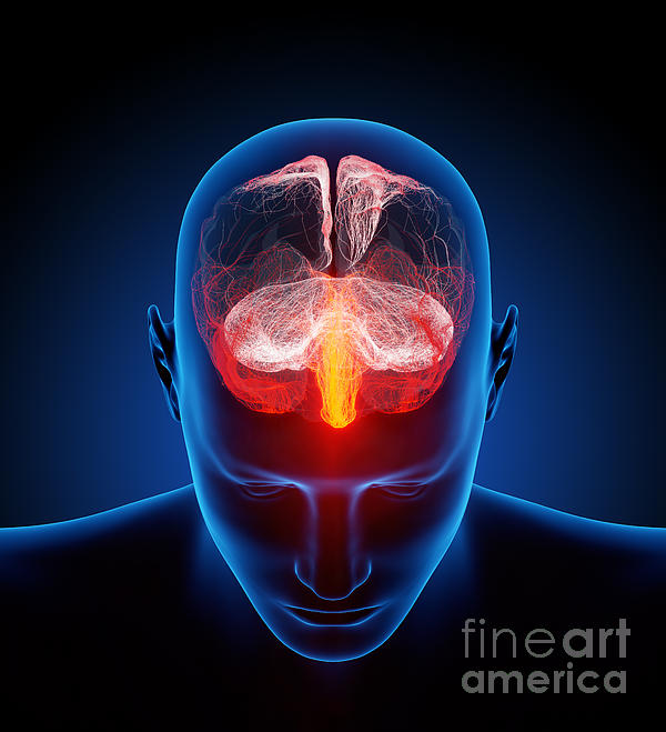 Human Brain Print by Johan Swanepoel