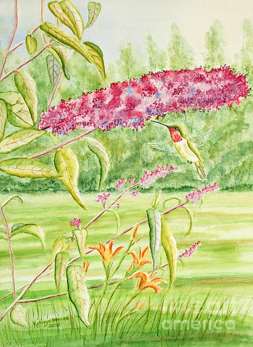 Hummer At Butterfly Bush Print by Kathryn Duncan