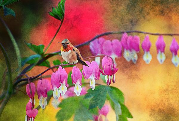 Hummer With Heart Print by Lynn Bauer
