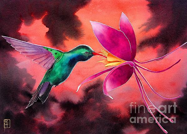 hummingbird and columbine print by robert hooper. Black Bedroom Furniture Sets. Home Design Ideas