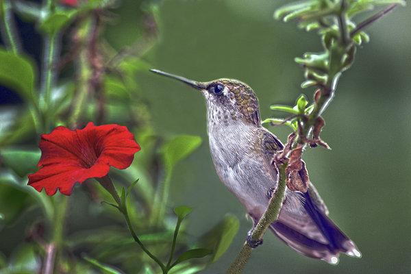 Sandi OReilly - Hummingbird Delight