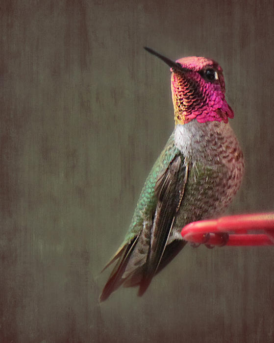 Hummingbird Flare Print by Melanie Lankford Photography