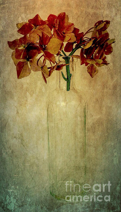 Hydrangea Print by Elena Nosyreva