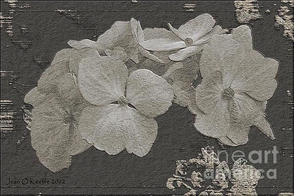 Jean OKeeffe Macro Abundance Art - Hydrangea Worlds