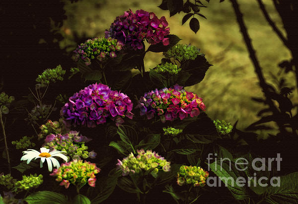 Hydrangeas In The Shade  Print by Elaine Manley