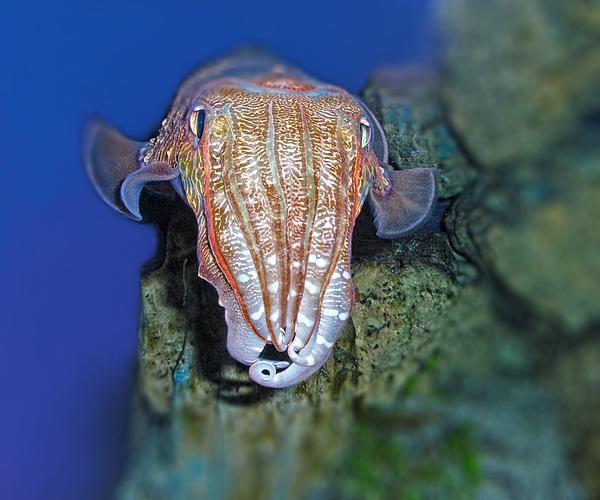 I Am An Octopus Print by TN Fairey