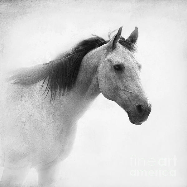 I Dream Of Horses Print by Betty LaRue
