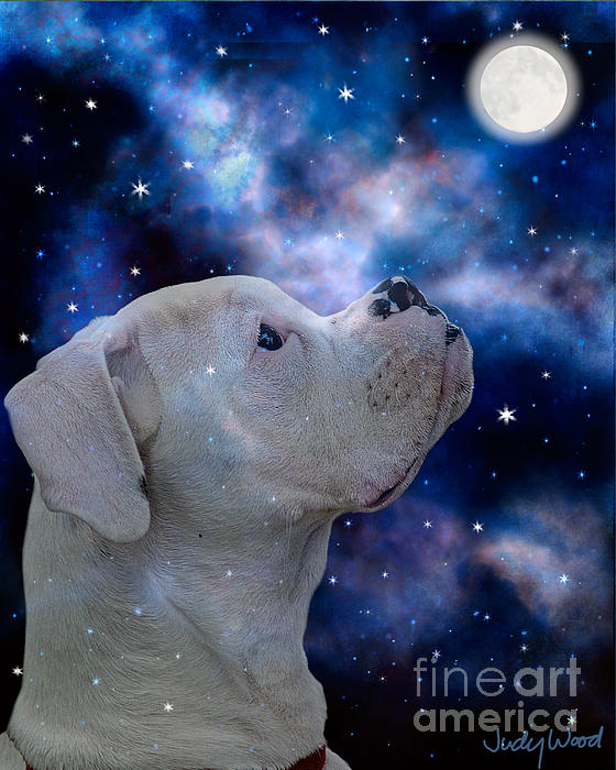 I See The Moon Print by Judy Wood