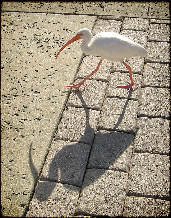 Ibis Print by Jeanette Charlebois