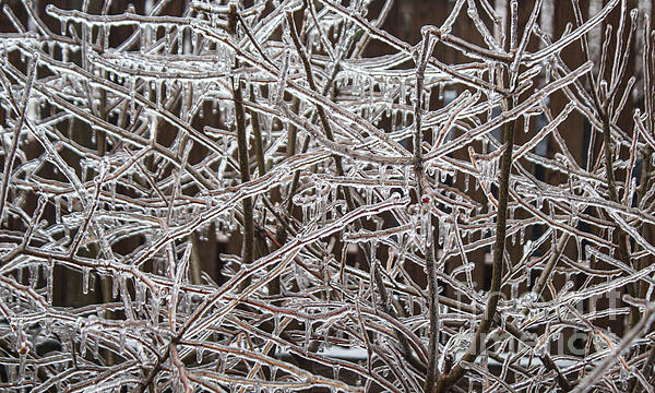 Ice Storm Print by Arlene Carmel