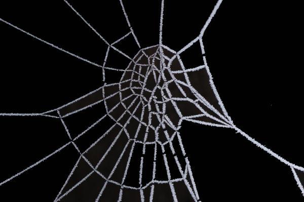 Ice Web Print by Carol Lynch
