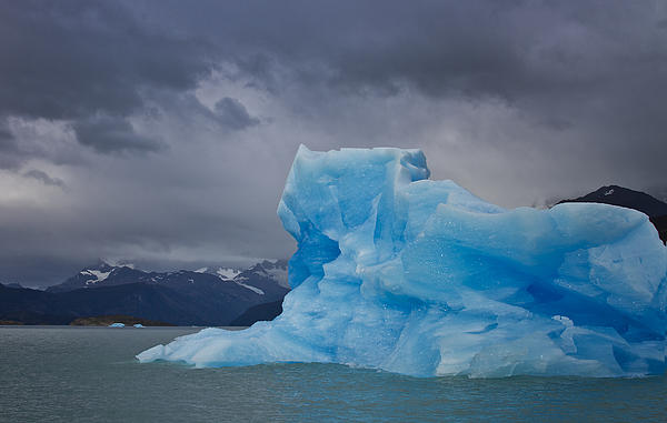 Iceberg Ahead Print by Kim Andelkovic