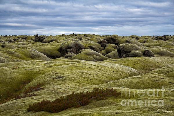 Icelandic Moss Print by Miso Jovicic