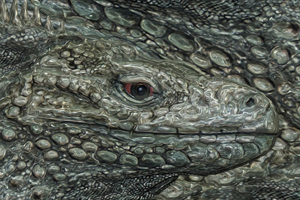 Iguana Print by Jack Zulli
