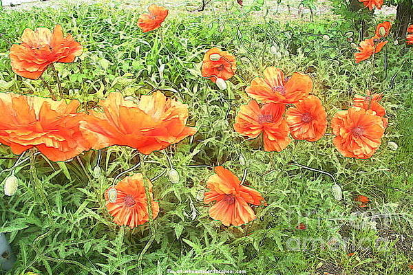 In Flanders Fields The Poppies Grow Print by PainterArtist FIN
