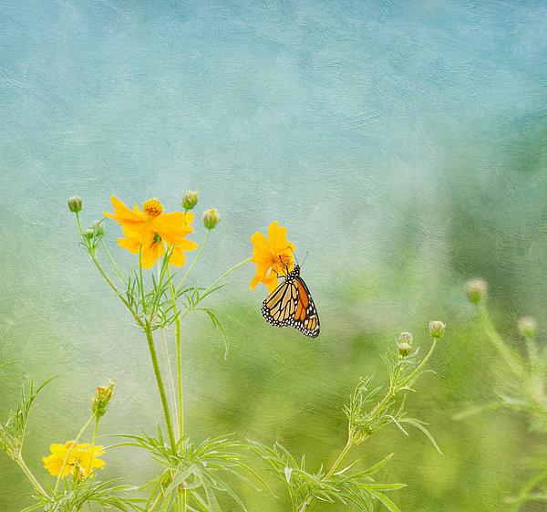 In The Garden - Monarch Butterfly Print by Kim Hojnacki