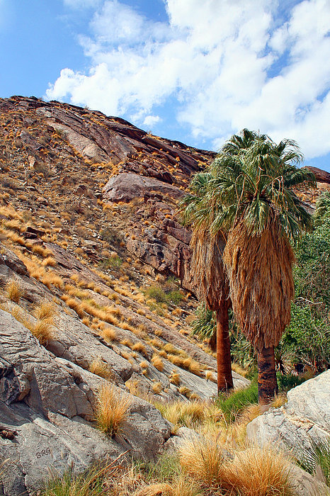 Indian Canyons View With Two Palms Print by Ben and Raisa Gertsberg