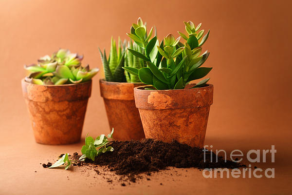 Indoor Plant Print by Boon Mee